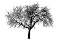agac 225x155 - Ağaç