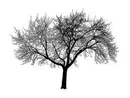 agac - Ağaç