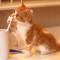 kahve falında kedi