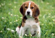 kopek 225x155 - Köpek