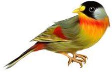 kuş 225x155 - Kuş