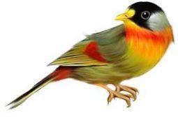 kuş 255x175 - Kuş
