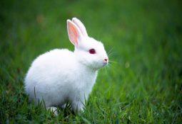 tavsan 255x175 - Tavşan