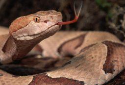yılan 255x175 - Yılan