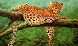 leopar 160x95 - Leopar