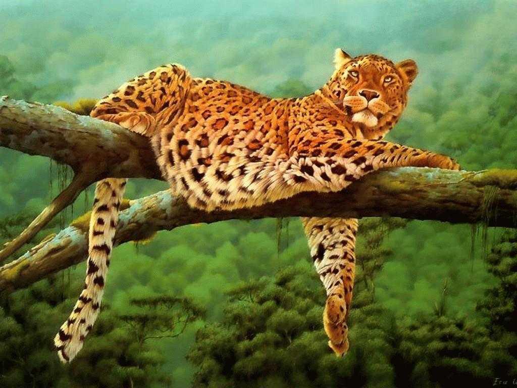 leopar - Leopar