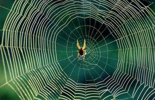 orumcek - Örümcek