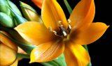 bitki 160x95 - Bitki