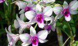 orkide 160x95 - Orkide
