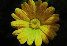 içek 225x155 - Çiçek Falı