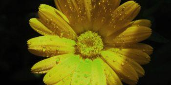 içek 350x175 - Çiçek Falı