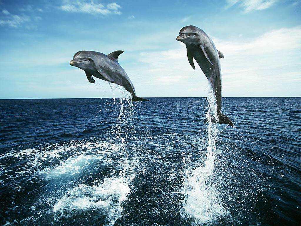 yunus baligi - Yunus Balığı