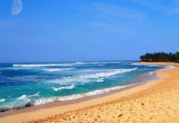 Deniz ve Sahil 682d0 255x175 - Sahil