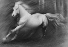 Horse Drawing 225x155 - Pegasus