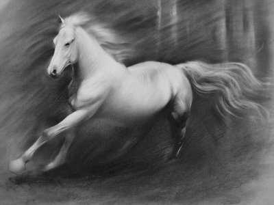 Horse Drawing - Pegasus