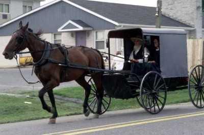at arabasi - At Arabası