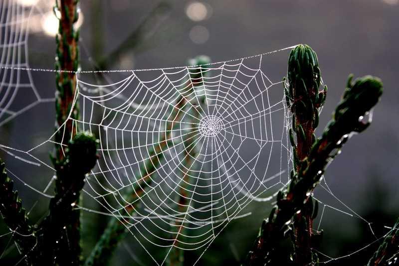 1928052 orumcek agi - Örümcek Ağı