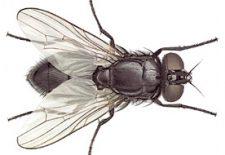 sinek ilaclama 225x155 - Sinek
