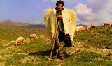 1643896 kepenekli coban usak asagikaracahisar koyu 160x95 - Çoban