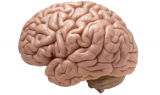 beyin ve kolesterol 160x95 - Beyin