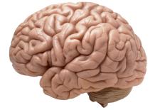 beyin ve kolesterol 225x155 - Beyin