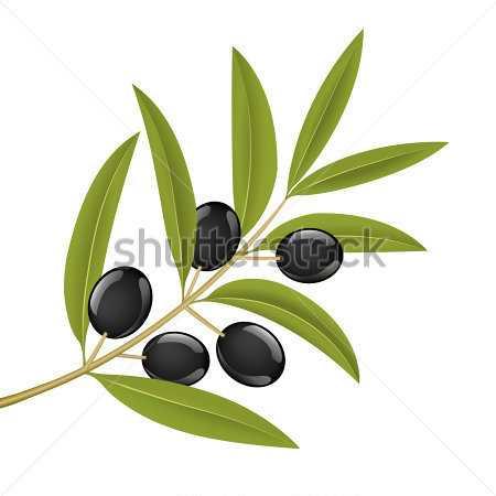 black olives on branch - Zeytin Dalı