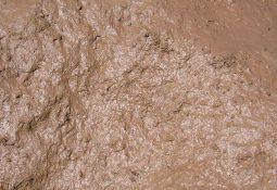 800px Mud closeup 255x175 - Çamur