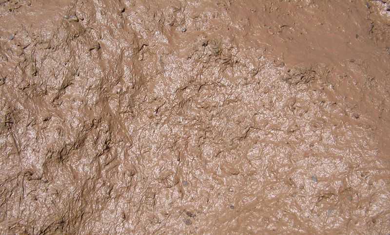 800px Mud closeup - Çamur