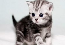 ruyada yavru kedi gormek 225x155 - Kedi Yavrusu
