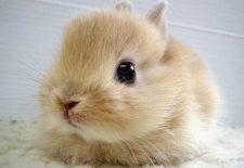tavşan yavrusu 225x155 - Tavşan Yavrusu