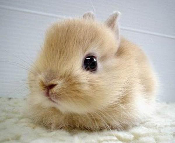 tavşan yavrusu - Tavşan Yavrusu