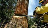 agac kesmek 160x95 - Ağaç Kesmek