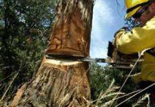 agac kesmek 225x155 - Ağaç Kesmek