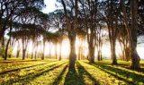 agaclik 160x95 - Ağaçlık
