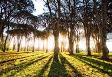 agaclik 225x155 - Ağaçlık