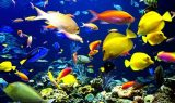 akvaryum baligi 160x95 - Akvaryum Balığı