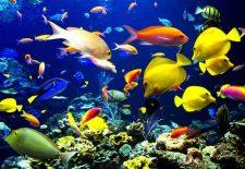 akvaryum baligi 225x155 - Akvaryum Balığı