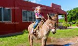 depositphotos 38998829 stock photo child riding a miniature donkey 160x95 - Eşek Üzerinde İnsan