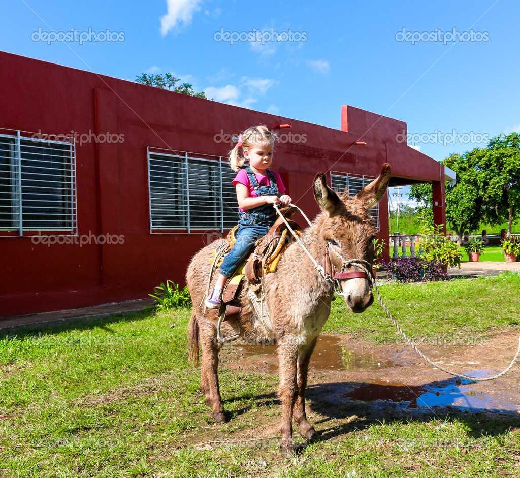 depositphotos 38998829 stock photo child riding a miniature donkey - Eşek Üzerinde İnsan