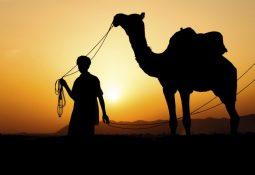 falda deveye binen birini görmek 255x175 - Deve katarı