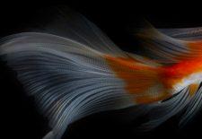 kahve falında balık kuyruğu görmek 225x155 - Balık Kuyruğu
