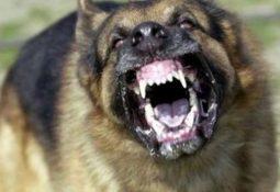 kopek havlamasi cinayeti davasinda arbede cikti 35844 255x175 - Köpek Kafası