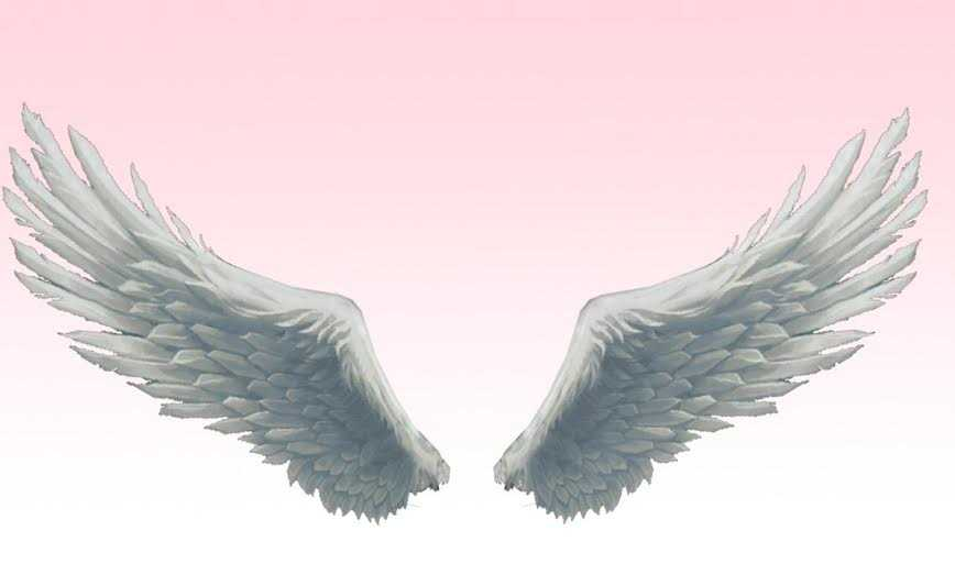 melekkanadı - Melek kanadı