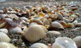 midye kabugu 160x95 - Midye Kabuğu