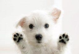 sevimli köpek Resimleri köpek Fotoğrafları2 255x175 - Köpek Patisi