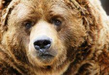 kahve falinda ayi kafasi gormek 225x155 - Ayı Kafası