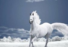 kahve falinda beyaz at gormek 225x155 - Beyaz At