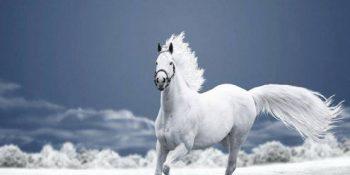 kahve falinda beyaz at gormek 350x175 - Beyaz At