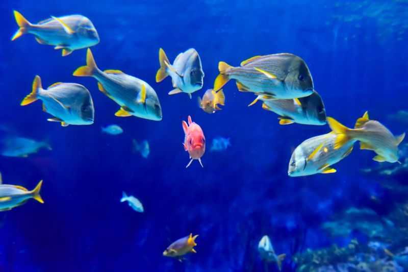 kahve falinda denizati ve balik gormek - Denizatı ve Balık