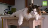 kahve falinda horoz ve kedi gormek 160x95 - Horoz ve Kedi